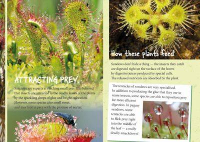 Spectacular Plants (12)