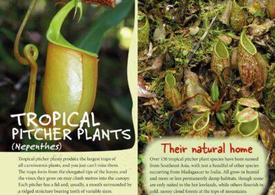 Spectacular Plants (13)