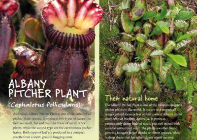 Spectacular Plants (14)