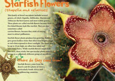 Spectacular Plants (16)