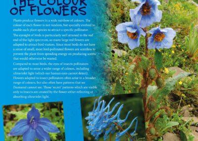 Spectacular Plants (9)