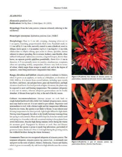 A Compendium of Miniature Orchid Species (4)