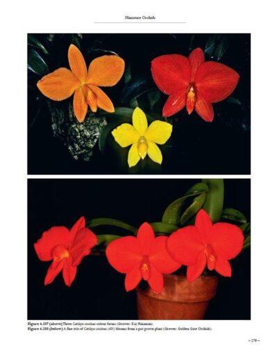 A Compendium of Miniature Orchid Species (8)