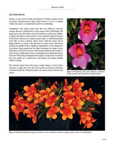 A Compendium of Miniature Orchid Species (9)